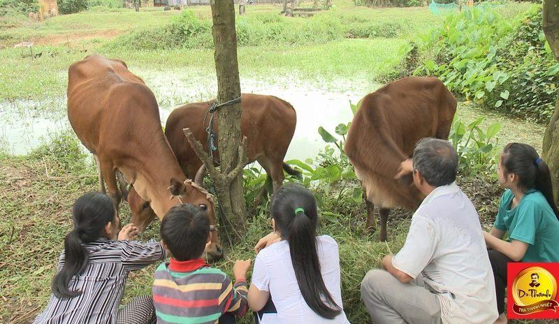 Nhờ cặp bò nhân ái, một gia đình đã thay đổi số phận khó tin