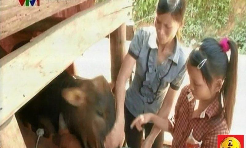 """Chương trình """"Lục lạc vàng"""" trao bò cho các hộ gia đình khó khăn ở Trạm Tấu – Yên Bái"""
