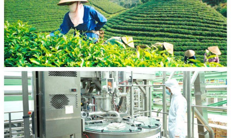 Xu hướng sử dụng thức uống trà xanh đóng chai bằng công nghệ Aseptic