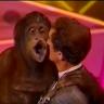 Xiếc hài, cười ngất với 2 chú khỉ cực thông minh