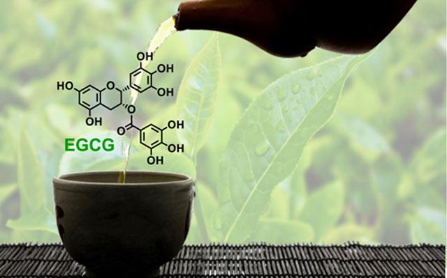 Hợp chất EGCG giúp trà xanh đóng chai trở thành vua thức uống giải khát