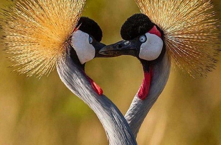 Những động vật chung thủy một vợ một chồng khiến con người cảm động