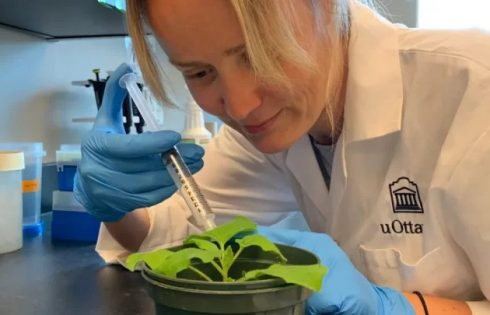 Vũ khí mới trong cuộc chiến chống Covid-19: xà lách vaccine trồng trong vườn nhà