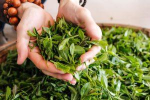 tác dụng của trà xanh đến sức khỏe