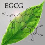 EGCG là gì