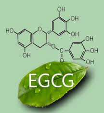 Lợi ích của EGCG là gì?